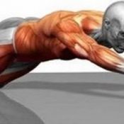 Best Ab Wheel Exercises: How to Do It The Right Way