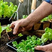 Attend a Kitchen Gardening Workshop and go organic by making fresh vegetables at home