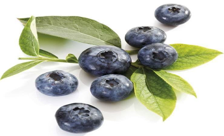 Top Health Benefits Of Blueberries: Juicy Fruits Packed with